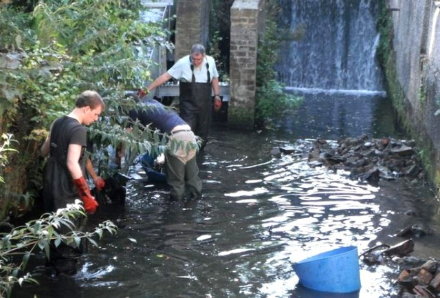 wandle trust volunteers